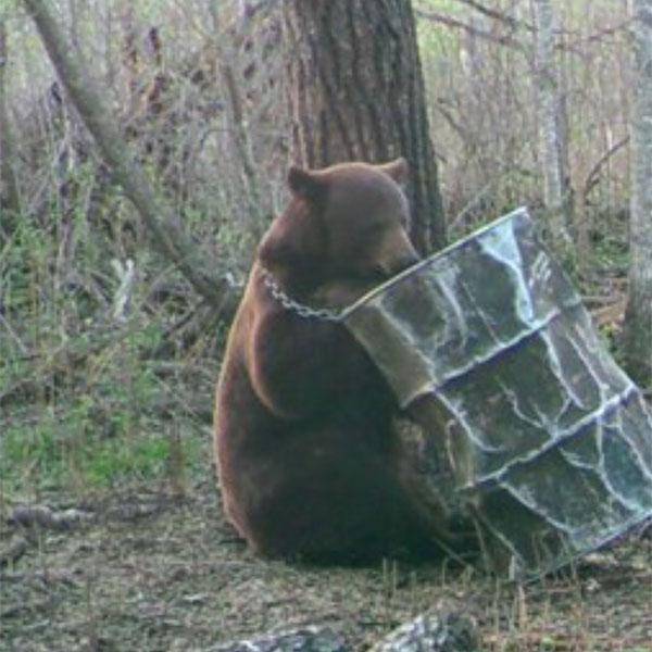 Bear Hunting in Manitoba, Canada